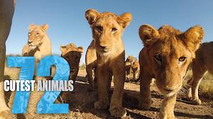 至 CUTE 動物排行榜 72